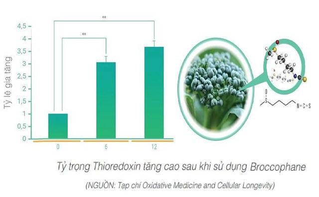 nh chất Broccophane thiên nhiên trong WIT có tác dụng tăng cường Thioredoxin